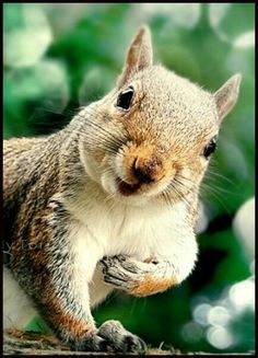 Funny Animals at Petting Zoo Zoo Animals Names, Cute Baby Animals, Animals And Pets, Funny Animals, Squirrel Pictures, Cute Animal Pictures, Cute Squirrel, Squirrels, Tier Fotos