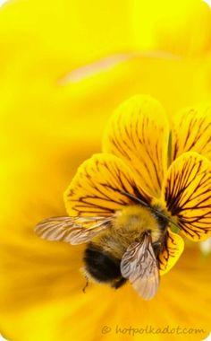 Bee Yellow...