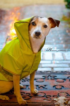 "Isis rain by Heavenly Pet Photography on ""What, it's raining?"