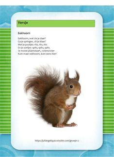 Versje: Eekhoorn