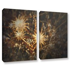 Falling Towards Stars by Mark Ross 2 Piece Photographic Print on Gallery Wrapped Canvas Set