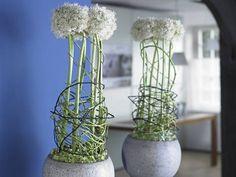 Aus der aktuellen Ausgabe: Alles Allium! Porträt und Deko zum Zierlauch