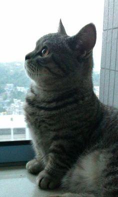 Tubby little kitty with stubby legs!