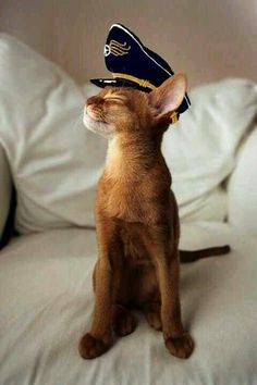 Captain Little Cat