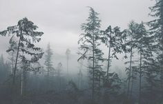 Juxtapoz Magazine - Wilderness Living