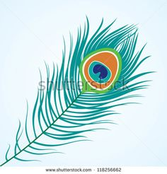 Vector isolated peacock feather