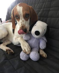 Happy #tongueouttuesday from Snoopy and I!  -Luna