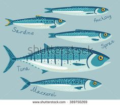 Fish collection for conservation in flat style. Set with anchovy, sardine, sprat, tuna and mackerel fishes for preservation. Sea fish vector illustration. Seafood packaging concept.
