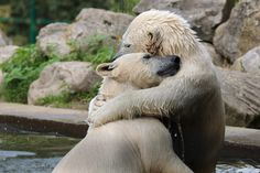 Polar bear twins by Andre Jansen, via 500px