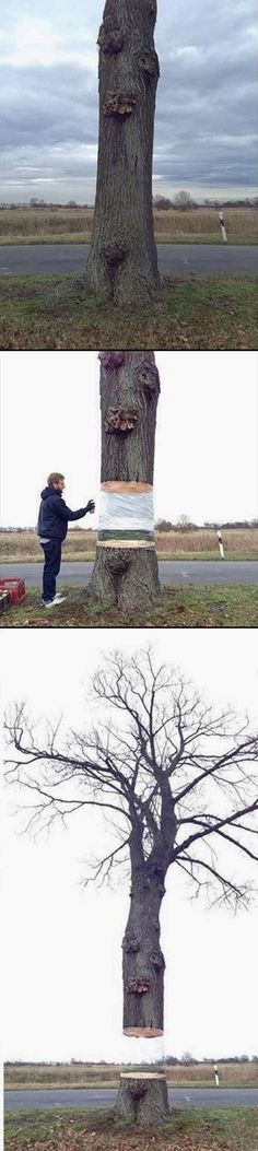 [German artists Daniel Siering and Mario Shu painted a section of a tree to make it look like it's missing.]