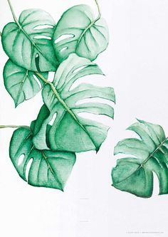 I would like to do…Monstera Deliciosa Tropical Free & Gorgeous Tropical Leaf Prints Watercolor Flowers, Watercolor Paintings, Painting Flowers, Leaf Paintings, Watercolor Logo, Art Flowers, Digital Paintings, Digital Art, Leaf Prints