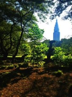 Shinjyku Gyoen, Tokyo  Take a walk through an oasis in Tokyo.