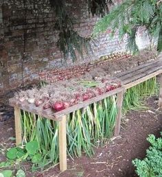 How to Harvest Onions When your onions finish developing. When they've finished developing, you'll notice the lowest leaves start to yellow and wither. Shortly after, the stems will flop over at the n