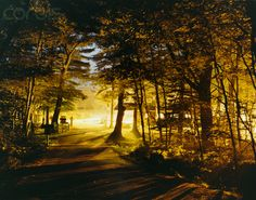 Path Trough Forest to a Lighted Parking Place