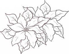 Poinsettia Flower Beautiful Coloring