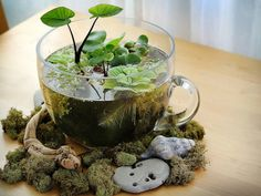 Create your own indoor water feature with plants (fish optional)