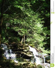 Photo about A serene forest scene of a mountain brook stream with roots gripping the rocks and moss shining in the light of a small waterfall. Image of trees, moss, scene - 59633900 Mountain Brook, Small Waterfall, Photo Tree, The Rock, Serenity, Scene, Stock Photos, Image, Stage