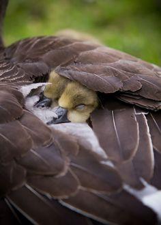 cute bird parents