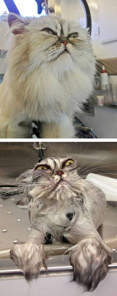 15 Hilarious Photos Of Pets Before And After Bath Time-Fuzzfix