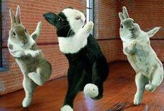 bunnies doing zumba?