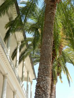 Palms and porches, Charleston, SC  Beautiful picture