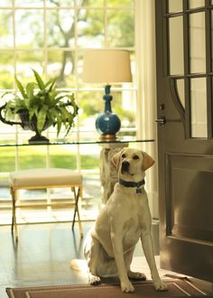 Pampered Pets on the TSG Blog. The Scout Guide @The Scout Guide Jackson