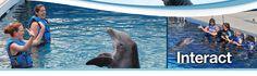 Florida's Gulfarium - Fort Walton Beach, Florida - Dolphins, Sea Lions, Seals - Destin, Florida