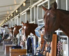 "Great barn aisle shot with everyone peeking out. The second horse in line has a ""Cinders"" face. Horse Show Mom, Horse Love, Show Horses, All The Pretty Horses, Beautiful Horses, Dream Barn, Dream Stables, All About Horses, Horse Farms"