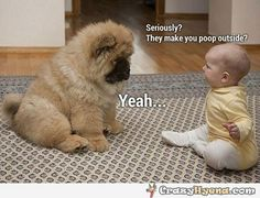 They make you poop outside? Yeah. Funniest photo of dog and baby.
