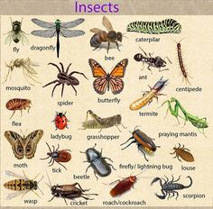 Forum | Learn English | Fluent LandInsects Vocabulary | Fluent Land