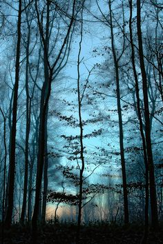 """""""First Light"""" (by Bob Fryer)"""