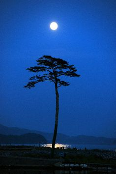 Sendai a pine tree left after Tsunami                                                                                                                                                                                 More