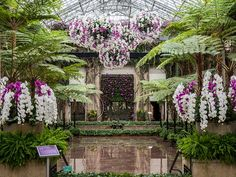 Longwood Gardens Orchid Extravaganza On View Now Thru March 27, 2016 | Longwood's award-winning Orchid curtain returns standing 17-feet high featuring 250 purple Phaleanopsis and Cattleya orchids in glorious bloom. Urns of mixed colors of Cymbidiums line the yellow-blooming Acacia Passage while the Silver Garden features hundreds of vibrant blue Vanda orchids hanging overhead.