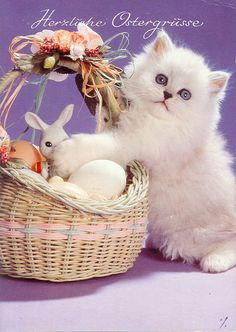 Easter cats 008