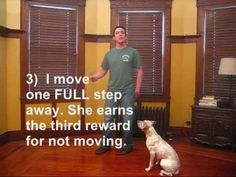 Teach Your Dog to Stay While You Walk Away - http://www.catchdogtrainers.com/