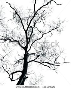 Dead Tree without leaves isolated on white background ,can be used for background