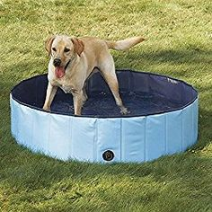 20 Swimming Pools For Dogs Ideas Dog Pool Swimming Pools Dogs