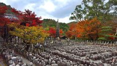 Adashino Nenbutsuji Near the Arashiyama Area [OC] Oc, Japanese, Cooking, Beautiful, Kitchen, Cuisine, Japanese Language, Koken, Brewing