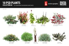 10 PSD Plants Collection 4 by envirographic on Creative Market