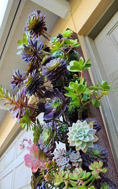 more hanging succulent gardens
