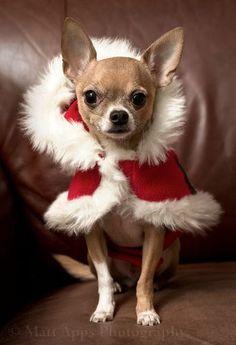 Porque la Navidade se está acercando ....