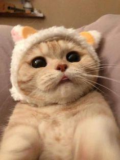 Cute Baby Cats, Cute Cats And Kittens, Cute Funny Animals, Cute Baby Animals, I Love Cats, Kittens Cutest, Pretty Cats, Beautiful Cats, Cute Cat Memes