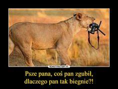 Psze pana, coś pan zgubił,dlaczego pan tak biegnie?! – Wtf Funny, Funny Memes, Jokes, Polish Memes, Text Memes, Lions, Animals And Pets, Haha, Disney