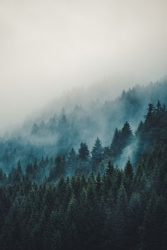 New Nature Mountains Forest Dreams Ideas Foto Nature, Landscape Photography, Nature Photography, Photography Women, Travel Photography, Beautiful Places, Beautiful Pictures, Misty Forest, Deep Forest