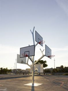 Basketball Tree ... Ok, so it needs no water, but who wouldn't love a basketball tree?!