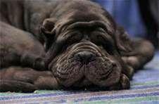 Akc Dog Breeds - Bing Images