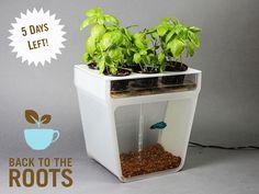 Home Aquaponics Kit: Self-Cleaning Fish Tank That Grows Food by Nikhil & Alejandro, via Kickstarter.
