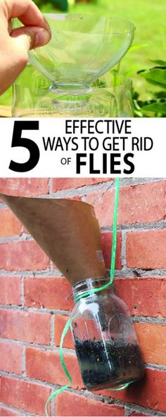 5 Effective Ways to get Rid of Flies Flies are a quick way to ruin a perfectly good picnic. I've researched several ways to get rid of flies with homemade fly traps and the results are amazing. Learn more. Fly Control, Diy Pest Control, Natural Fly Trap, House Fly Traps, Fly Remedies, Natural Remedies, Homemade Fly Traps, Fly Traps Diy, Flies Outside