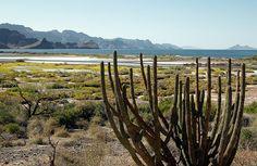 Baja California su flora