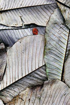 Осень: красота в деталях
